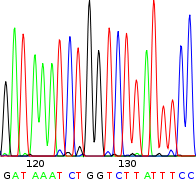 DNA sequence. Bron: Wikimedia Commons, Public Domain.