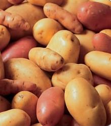 Aardappelvarieteiten. Bron en copyright: Belgapom