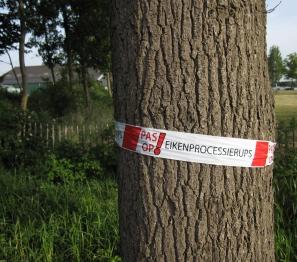 Waarschuwingslint om eik. Foto: Doriet Willemen