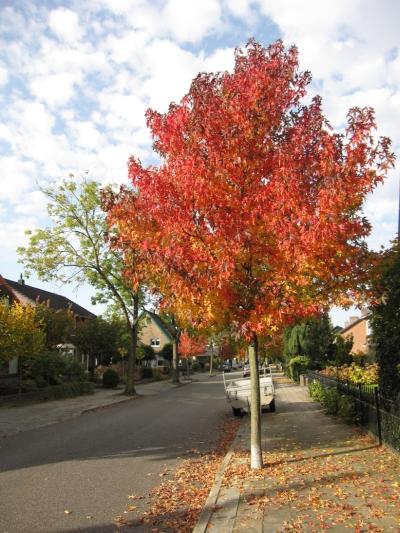 Herfstkleuren. Foto:D. Willemen