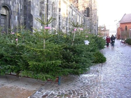 Kerstbomen wachten op hun nieuwe bestemming. Bron: Wikipedia. GFDL