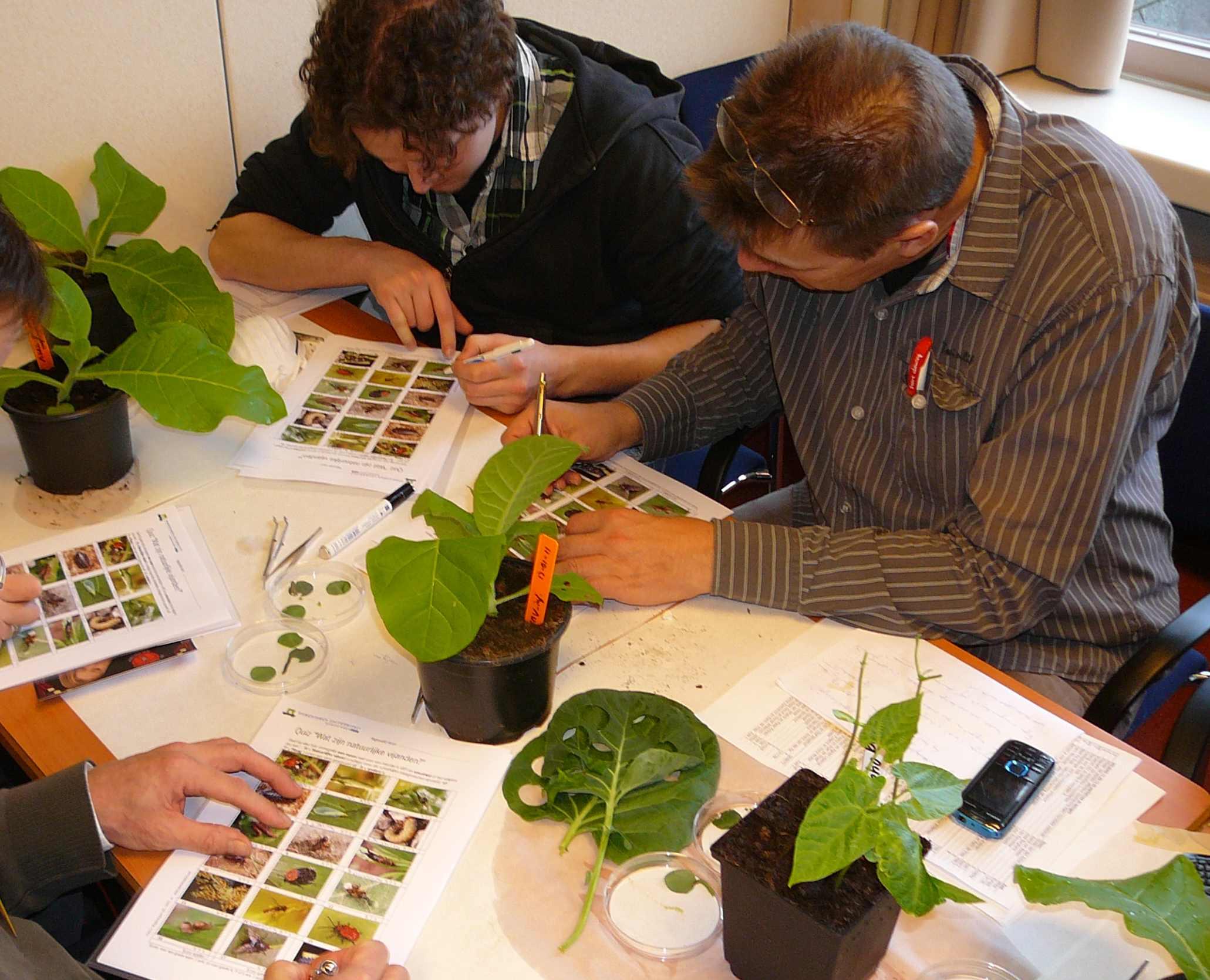 Planten in de klas. Ook leuk om proefjes mee te doen. Foto: Jan-Kees Goud.