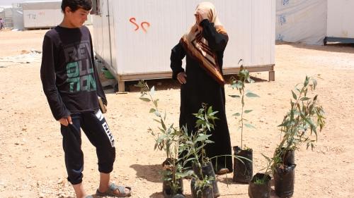 Boompjes voor de aanleg van tuintjes in vluchtelingenkamp Za'atari. Foto en copyright: Robert Kruijt.