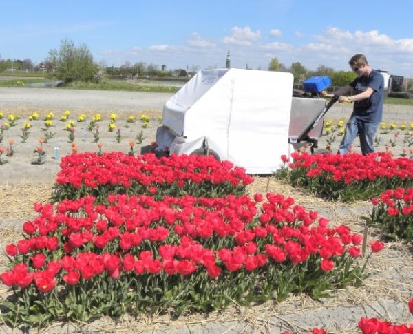 De ziekzoekrobot in actie op een testveld met tulpen. Foto en copyright: WUR-PPO.
