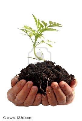 De gezondheid van een plant wordt mede bepaald door de bodem. Foto: Vladimir Gavrilov. Copyright: 123RF