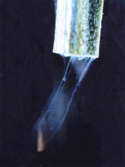 Typische waas van bruinrotbacterien (Ralstonia solanacearum) die uit een doorgesneden aardappelstengel (Solanum tuberosum) stromen in water. Foto: J.D. Janse; Copyright: CABI, Wallingford, UK/Plantenziektenkundige Dienst, gebruikt met toestemming; Bron: Phytobacteriology - Principles and Practice, J.D. Janse, 2005.